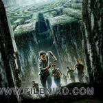 maze runner (2)