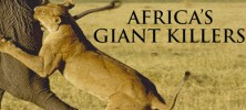 Africa's-Giant-Killers