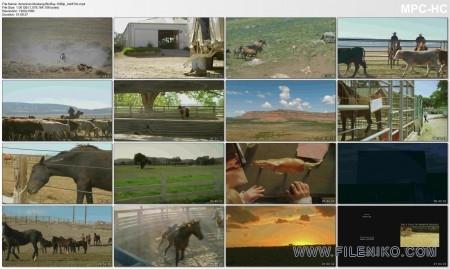دانلود مستند 2013 American Mustang اسبهای وحشی آمریکایی مالتی مدیا مستند