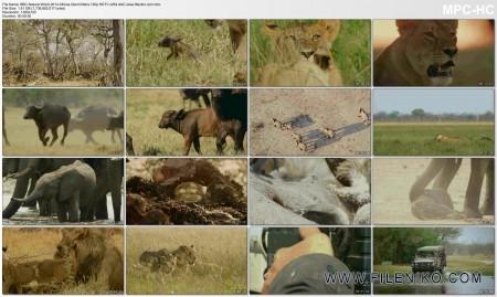 دانلود مستند Africa's Giant Killers مالتی مدیا مستند