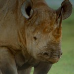 دانلود مستند  1994 IMAX: The Serengeti پارک ملی سرنگتی مالتی مدیا مستند