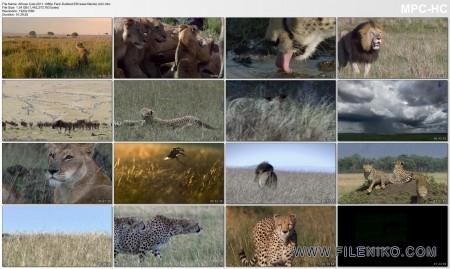 دانلود مستند African Cats گربه سانان آفریقایی با دوبله فارسی مالتی مدیا مستند