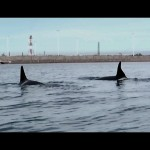 Blackfish.2013.1080p.Farsi.Dubbed.www.fileniko.com.mkv_snapshot_00.23.39_[2015.04.27_00.24.01]