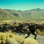 IMAX.Dinosaurs.Giants.of.Patagonia.BluRay.1080p.www.fileniko.com.mkv_snapshot_20.55_[2015.04.28_10.19.17]