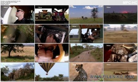 دانلود مستند  Wild Killer Shots: Lion Stalker 2013 مالتی مدیا مستند