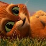 دانلود انیمیشن Puss in Boots گربه چکمهپوش دوبله فارسی + زبان اصلی انیمیشن مالتی مدیا