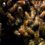 Worlds Biggest.Baddest.Bugs.1080p.www.fileniko.com.mkv_snapshot_01.23.55_[2015.04.26_21.05.23]