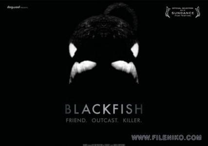 دانلود مستند Blackfish 2013 ماهی سیاه دوزبانه(دوبله فارسی+زبان اصلی) مالتی مدیا مستند