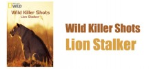 wild-killer-shots-lion-stalker