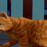 دانلود انیمیشن Garfield گارفیلد دوبله فارسی انیمیشن مالتی مدیا