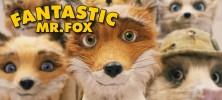 fan-fox
