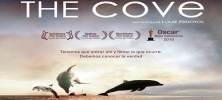 the-cove-banner