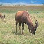 دانلود مستند Amazing Africa 2013 آفریقای شگفت انگیز به همراه نسخه 3 بعدی مالتی مدیا مستند