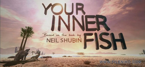 دانلود مستند PBS: Your Inner Fish 2014 ماهی درونی شما با زیرنویس فارسی