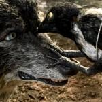 دانلود انیمیشن کوتاه زیبای پیتر و گرگ Peter and the Wolf برنده اسکار 2008 انیمیشن مالتی مدیا