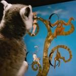 دانلود مستند Island of Lemurs: Madagascar 2014 جزیره لمورها: ماداگاسکار مالتی مدیا مستند