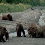 دانلود مستند Land of the Bears 2014 سرزمین خرسها به همراه نسخه 3 بُعدی مالتی مدیا مستند