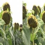 دانلود مستند Unsere Natur 3D 2012 طبیعت ما (3 بعدی) مالتی مدیا مستند