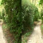 Nature.3D.6