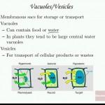 Cells_Parts_Characteristics_Biology_Bio_3_Cam_Lec.mkv_snapshot_00.47.58_[2015.10.19_15.16.44]