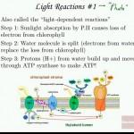 Cellular_Energy_Part_I_Biology_Bio_5_Cam_Lec.mkv_snapshot_38.03_[2015.10.19_15.17.21]