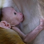 دانلود مستند Monkey Kingdom 2015 قلمرو میمونها با دوبله فارسی مالتی مدیا مستند مطالب ویژه