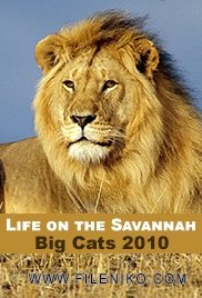 دانلود مستند گربه های بزرگ Life on the Savannah: Big Cats 2010 مالتی مدیا مستند