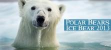 Ice-Bear-2013