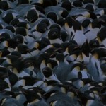 March.of.the.Penguins.2005.720p.www.fileniko.com.mkv_snapshot_00.48.29_[2016.02.29_21.58.21]