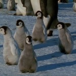 March.of.the.Penguins.2005.720p.www.fileniko.com.mkv_snapshot_01.09.50_[2016.02.29_21.59.33]