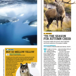 دانلود مجله ی BBC Wildlife شماره November 2015 مالتی مدیا مجله