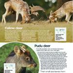 دانلود مجله ی World of Animals-Issue 27 2015 مالتی مدیا مجله
