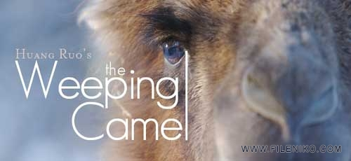 Weeping-Camel-banner-fnik