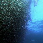 دانلود مستند اقیانوس وحشی IMAX Wild Ocean 2008 با کیفیت 1080p مالتی مدیا مستند
