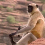 دانلود مستند World's Weirdest: Animal Taboos Meet The Parents 2015 مالتی مدیا مستند