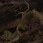 دانلود مستند National Geographic World's Worst Venom 2007 بدترین زهرهای جهان مالتی مدیا مستند