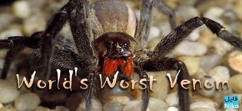 Spider.fileniko