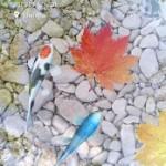 دانلود Water Garden Live Wallpaper v1.38 برای اندروید موبایل نرم افزار اندروید