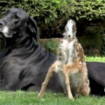 دانلود مستند PBS - Nature: Animal Odd Couples 2012 زوج های شگفت انگیز حیوانات مالتی مدیا مستند