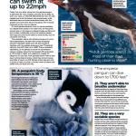 دانلود مجله ی World of Animals-Book of Sharks and Ocean Predators مالتی مدیا مجله