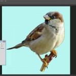 دانلود Turn a Photo into a Pattern Selection Filter Pattern Swatch فیلم آموزشی درج عکس در یک الگوی مشخص فتوشاپ آموزش گرافیکی مالتی مدیا