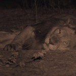 India Wandering Lions (2016) 720p.www.fileniko.com.mkv_snapshot_30.48_[2016.05.05_10.36.34]