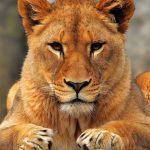 دانلود مجموعه والپیپر HD با موضوع طبیعت و حیوانات تصاویر پس زمینه و لایه باز مالتی مدیا