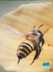 دانلود انیمیشن کوتاه زنبورعسل – Bee انیمیشن مالتی مدیا