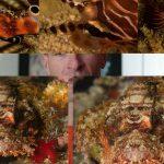 4 Underwater Wildlife.mp4_snapshot_01.33_[2016.08.03_09.12.07]
