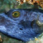 دانلود Udemy Photography Underwater Photography - دوره آموزشی عکاسی زیر آب آموزش عکاسی آموزشی مالتی مدیا