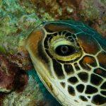 4 Underwater Wildlife.mp4_snapshot_07.01_[2016.08.03_09.12.24]