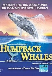 دانلود مستند Humpback Whales 2015 وال های گوژپشت مالتی مدیا مستند