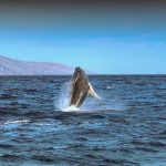 whales2015-fileniko (6)