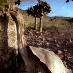 دانلود مستند Charles Darwin and the Tree of Life چارلز داروین و درخت زندگی با زیرنویس فارسی مالتی مدیا مستند